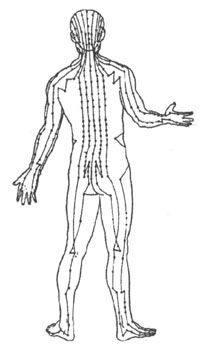 Five Elemets Acupuncture: Acupuncture Meridians