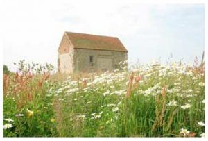 Image result for Summer Sunday Evening Services 2018 st peter's bradwell