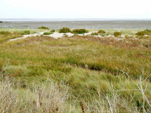 The nature reserve includes 30 acres of shell bank and extensive mudflats (saltings)