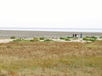The reserve is 30 acres of shell bank together with extensive salt marsh