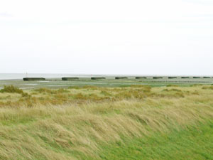 a row of barges sunk just offshore to protect the saltmarsh and seawall from erosion