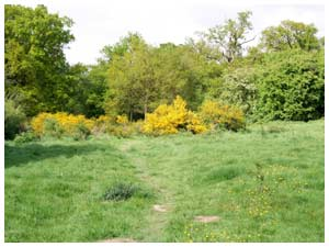 an area bright with gorse and definite evidence of mole tunnelling!