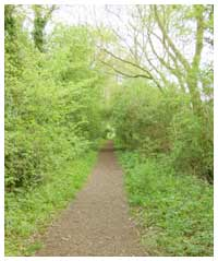 The Old Railway Nature Reserve