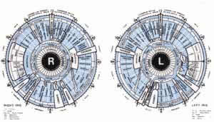Iridology Charts for the right and left eyes