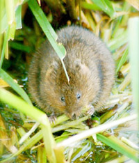 Kevin-Ritchie-watervole1