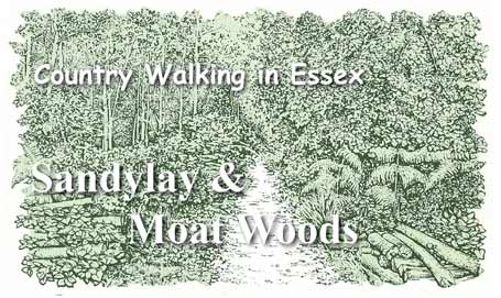 Country Walking in Essex: Sandylay and Moat Woods