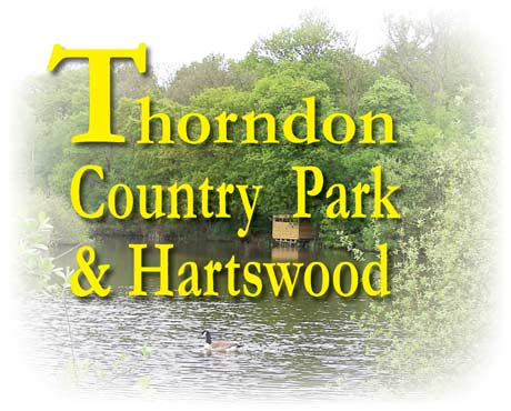 Thorndon Country Park and Hartswood