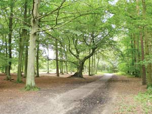 Tree lined path in Thorndon Country Park