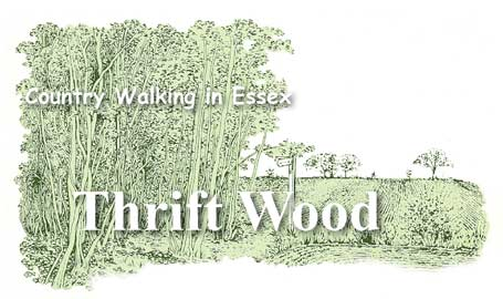 Country Walking in Essex - Thrift Wood