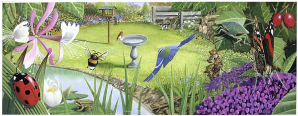 Wildlife Garden - Illustration by Chris Sheilds