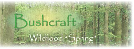 Bushcraft: Wildfood Spring