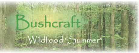 wildfood in Summer