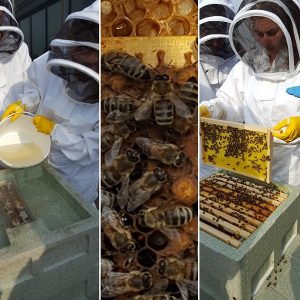 PhotoCredit_City of Liverpool College Beekeeping
