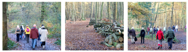 West Wood Walk 7, Coppicing & Crossing Prittle Brook