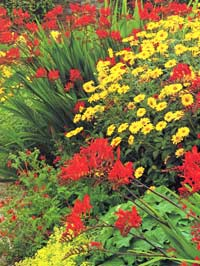 Crocosmia-and-daylilies