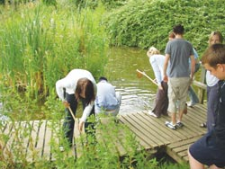 Pond Dipping at Hanningfield