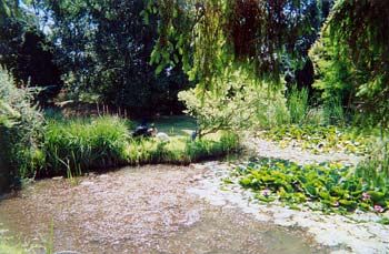 Katarina's garden at her home-based practice, in Peldon, near Colchester