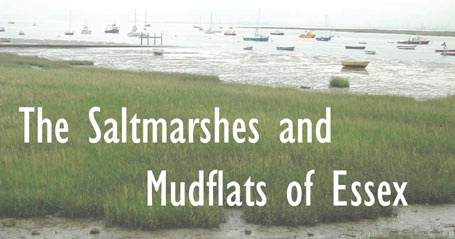 The Saltmarshes and Mudflats of Essex