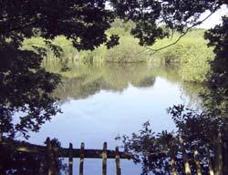 Childerditch Pond