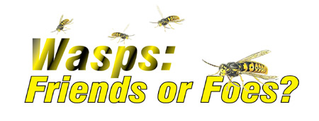 Wasps: Friends or Foes?