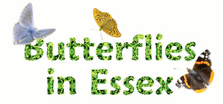 Butterflies in Essex