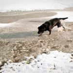 dog-on-a-snowy-shore