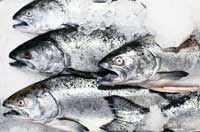 Oily fish such as sardines, salmon and mackerel – choose at least once a week