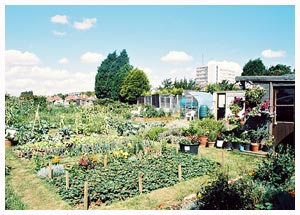 An allotment in Southend