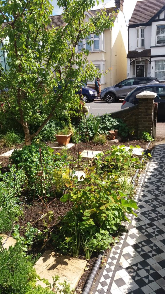 A front garden planted with fruit and veg