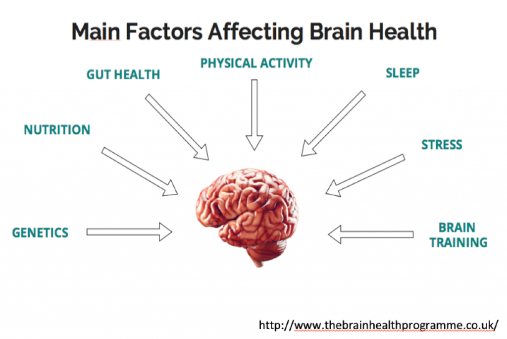 Main factors affecting brain health