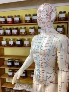acupuncture. dummy showing meridian acupoints