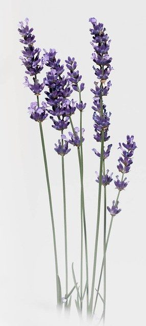 Lavender is a good natural rememdy to help you sleep