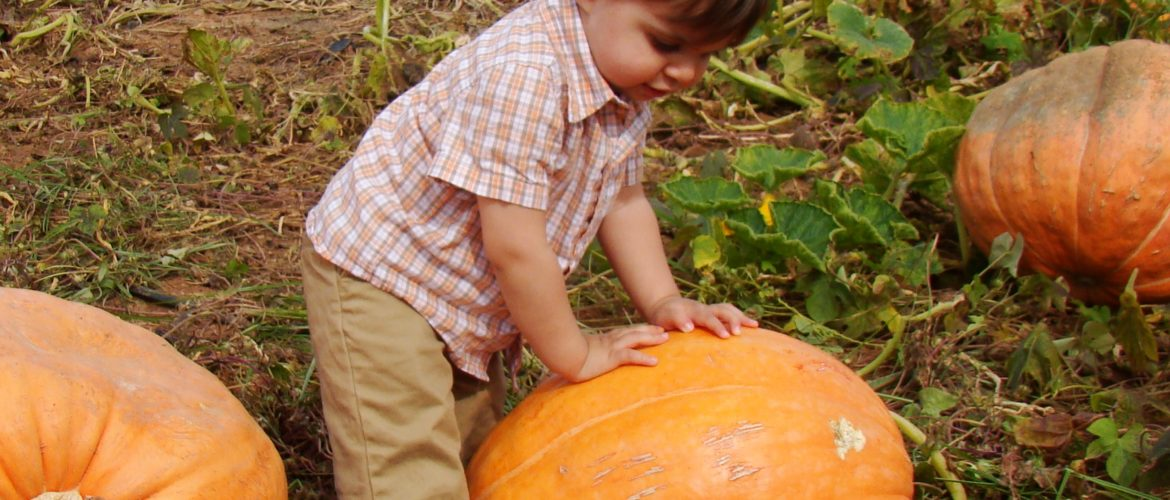 Getting your children gardening. Boy with pumkins
