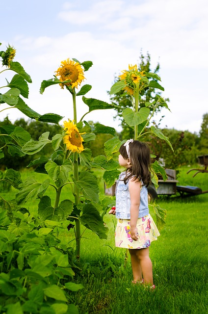 Girl looking at sunflowers.