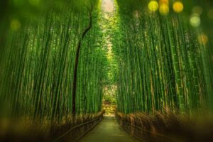 let positive energy flow with feng shui