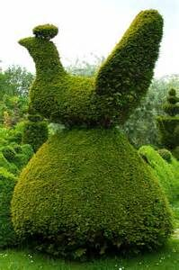 clippings topiary and pruning techniques
