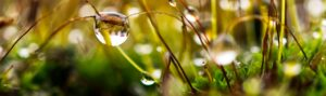 water conservation for gardeners and allotment holders