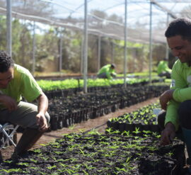With an aim to plant 8 billion trees that all start as little seedlings